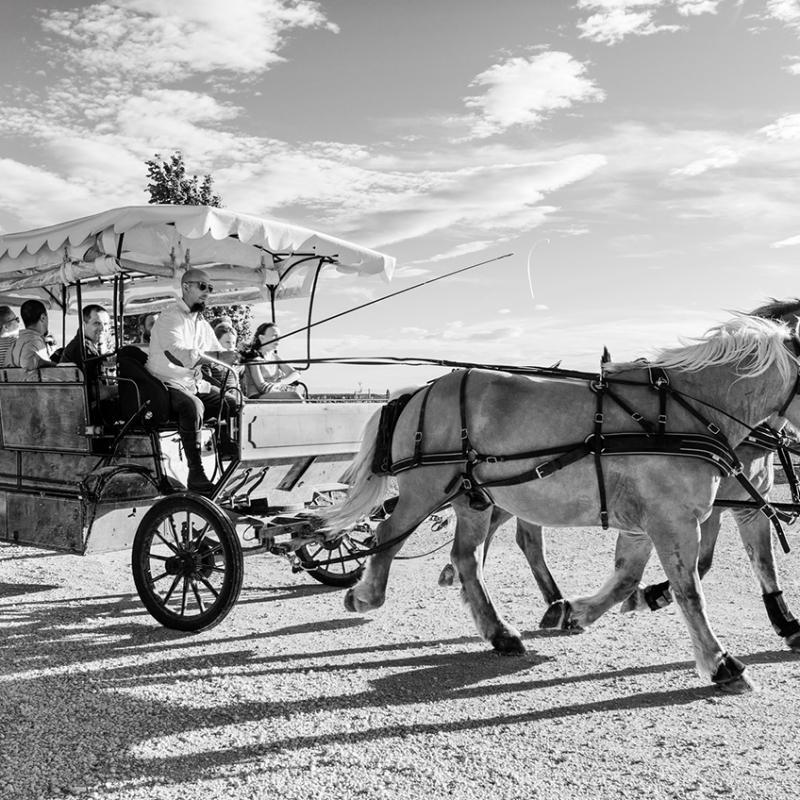 Saint-hilaire-dhozillan-caleche-pour-transporter-ecoliers-Gard